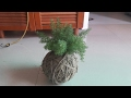 Kokedama || How to make Japanese Kokedama ||26 April, 2017