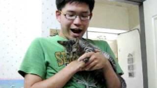 貓咪好配合:P.