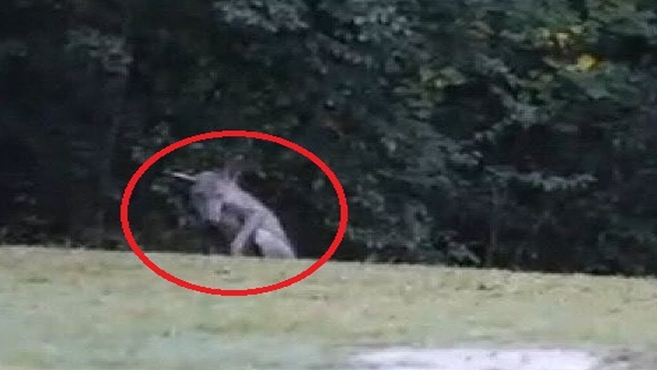 Download Top 10 Mythical Creatures Caught On Camera