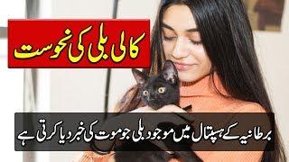 Black Cats - Lucky Or Unlucky - Mysteries Of Animals - Purisrar Dunya Urdu Documentaries
