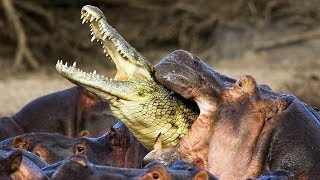 13 Animales Que Se Odian