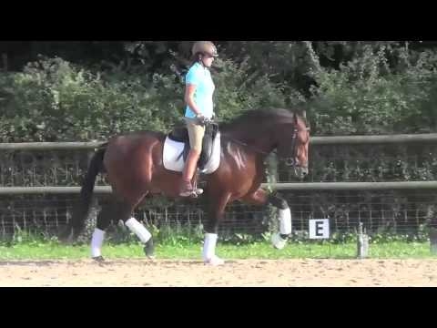 Selection Of PRE / Andalusian Horses For Sale
