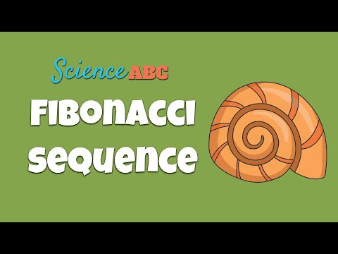 What is the Fibonacci Sequence & the Golden Ratio? Simple Explanation and Examples in Everyday Life