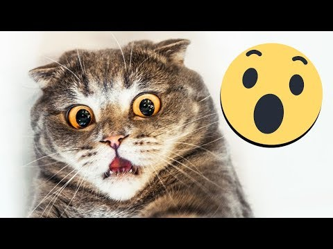 Funniest Pet 😸Compilation - Funny Video 2019