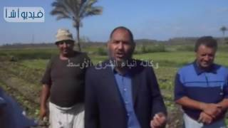 بالفيديو : طريقة زراعة بنجر السكر ومشاكله فى دمياط