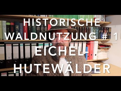Hutewaldwirtschaft - Hist. Waldnutzung #1