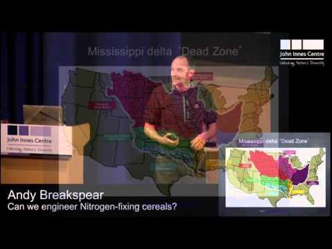 Engineering nitrogen-fixing symbiosis in cereals