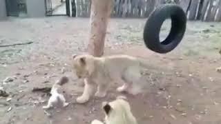 Всё забавное о животных