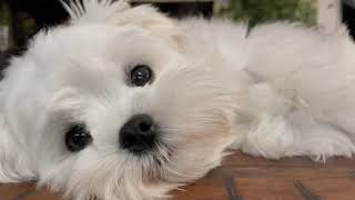 10 MISTAKES TO AVOID WITH YOUR PUPPY