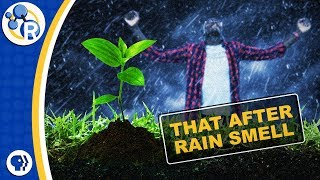 What's That After-Rain Smell Made Of?