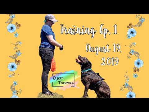 Training My 5-year-old Dog To Heel