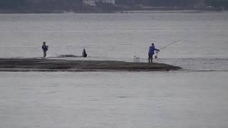 満潮時でも日曜日は釣り人の姿が多くなる和歌山県田辺市元島、天神崎 釣太郎