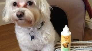 Dog Product Review: Burt's Bees Tear Stain Remover