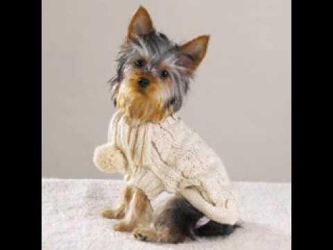Одежда для собак из старых вещей | Как сшить одежду для собак .