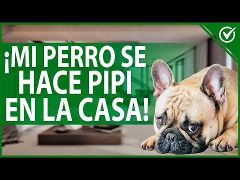 🐶 ¿Por qué mi Perro hace Caca y Pipi en Casa? Cómo Enseñarle a que no lo Haga 🐶💩