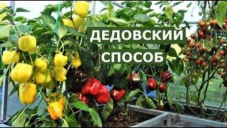 Секрет хорошего урожая или дедовский метод