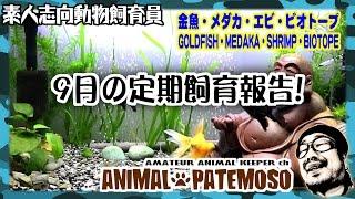 再生リスト◇ 金魚動画 http://bit.ly/2bQQiz0 メダカ動画 http://bit.ly...