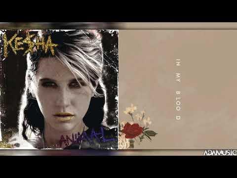 """Animal In My Blood"" - Mashup of Shawn Mendes/Kesha"