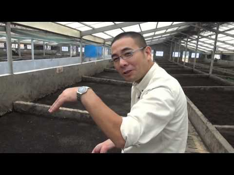Hangzhou Tianyuan Agriculture Company rearing fly larvae in pig manure