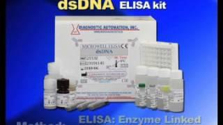 dsDNA ELISA kit