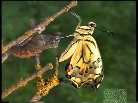 Come Nasce Una Farfalla Animali Dal Mondo