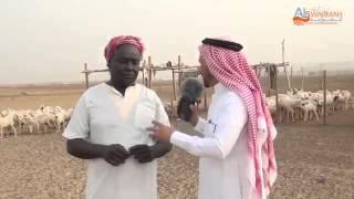 لقطه من قرية الصوارمه علي المسعيد راعي الكحيله
