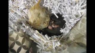 Gerbil Babies Days 1-14