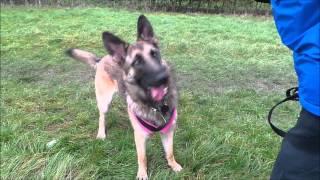 Dogs Trust Leeds - Bella