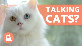 CAN CATS TALK? 😸💬 Cats Making Human Sounds