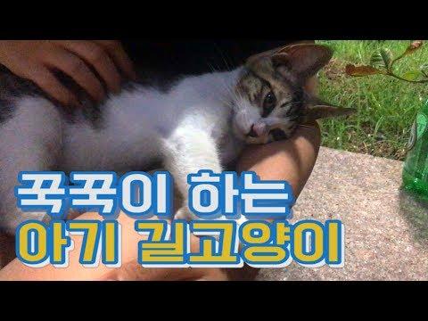[날짱TV] 꾹꾹이 하는 아기 길고양이를 만났어요 애교많은 귀여운 냥이