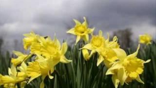 Edvin Marton - Spring (Antonio Vivaldi)