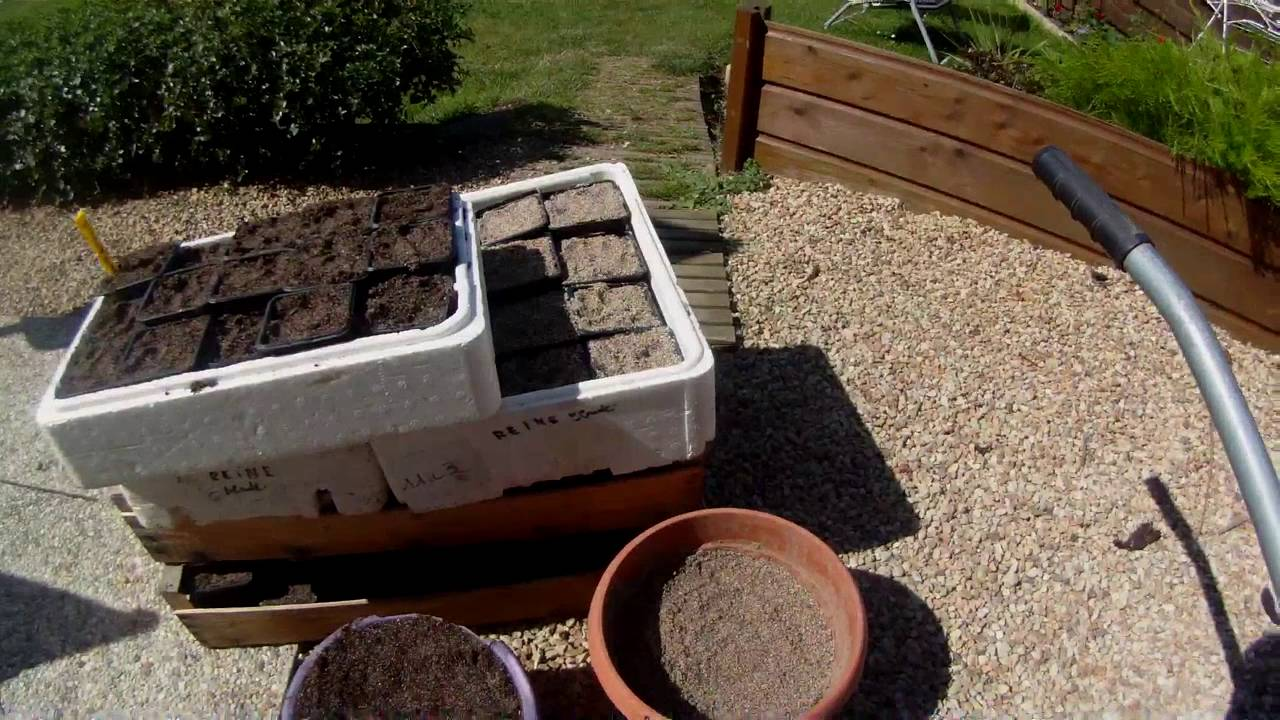 planter un noyau de prune