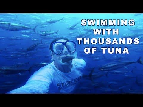 Feeding Bluefin Tuna Inside A Mexican Tuna Farm | Stoked On Fishing |