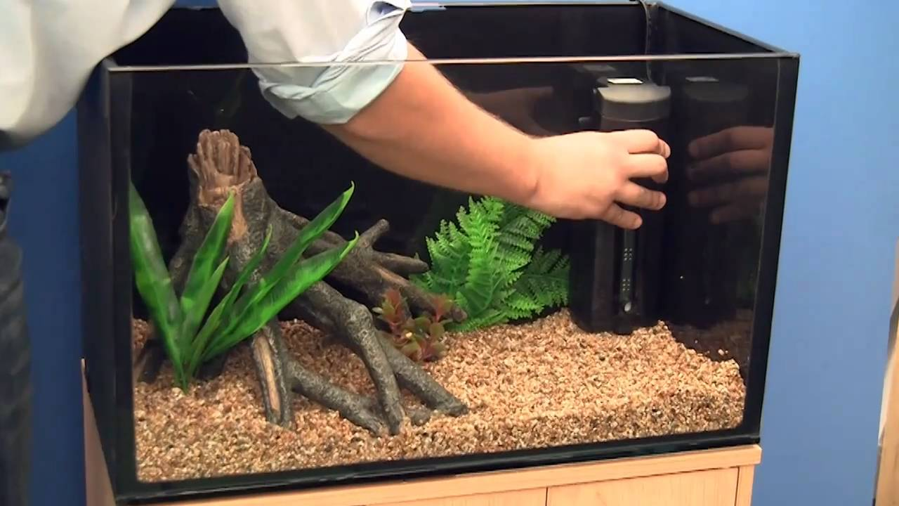 Setting up a goldfish aquarium youtube for Freshwater fish tank setup