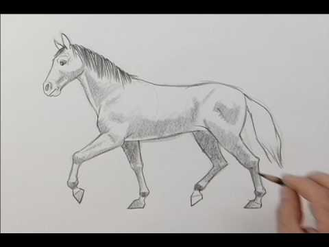 Drawing a Horse.