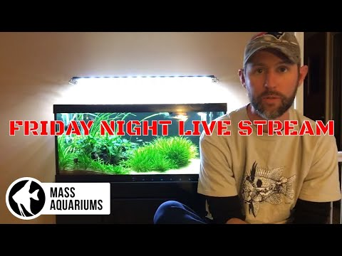 MASS Aquariums Friday Night Live Stream!