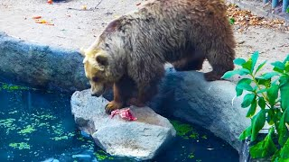 Bear Saves Bird From Drowning