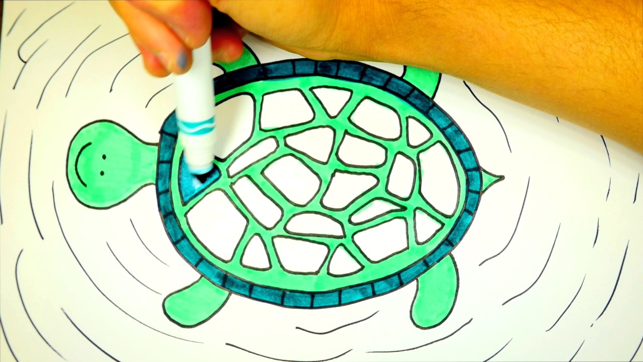 - How To Draw And Color A Turtle Turtle Coloring Page For Kids