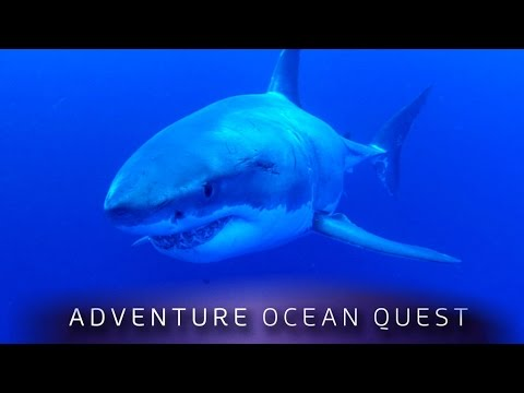 ► Adventure Ocean Quest - The White Sharks of Guadalupe (FULL Documentary)