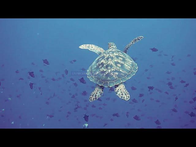 Морские черепахи и не только
