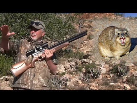 AIRGUN HUNT: African Small Game!