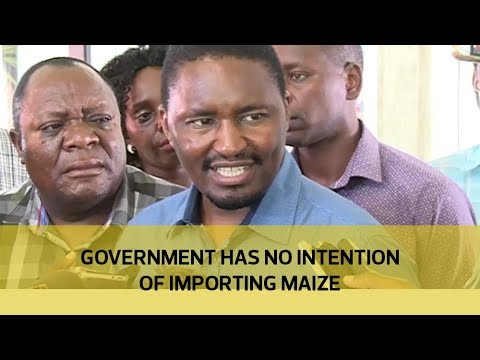 Government has no intention of importing maize