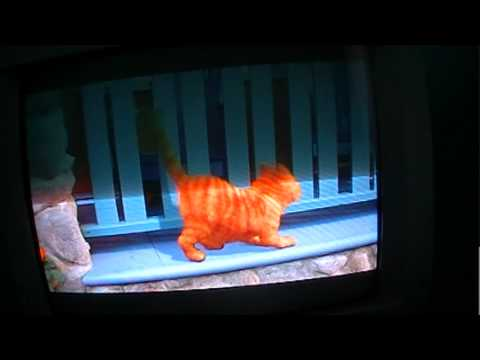 Garfield the movie part 1 Travel Video