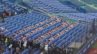 日本体育大学 優勝のエッサッサ(第48回 明治神宮野球大会_171115) thumbnail
