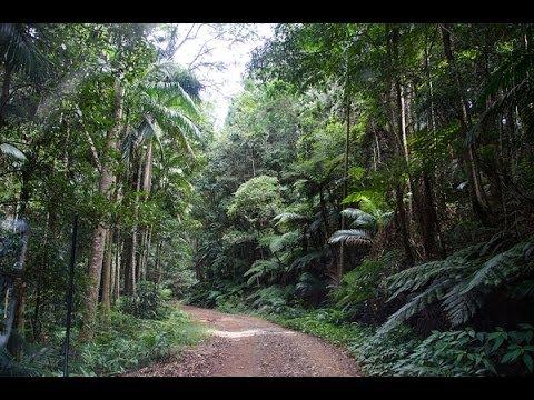 Woodford to Kenilworth - Rainforest Trip April 2014