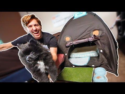 CHEDDAR THE PUPPY'S DREAM DOG HOUSE! #pomeranian