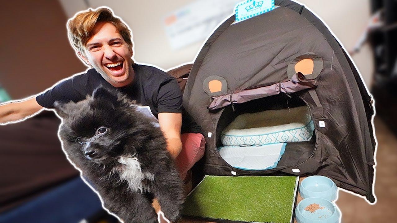 cheddar-the-puppy-s-dream-dog-house-pomeranian