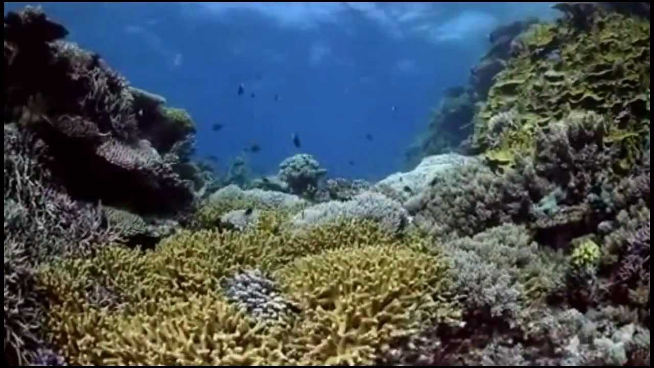 what is the meaning of barrier reef