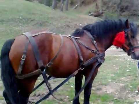 gigi busy cu cai la padure