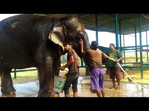 Wildlife SOS: Maya Inspects Me While Chanchal Gets a Bath